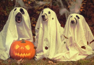 dogs halloween