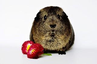 beaver flower