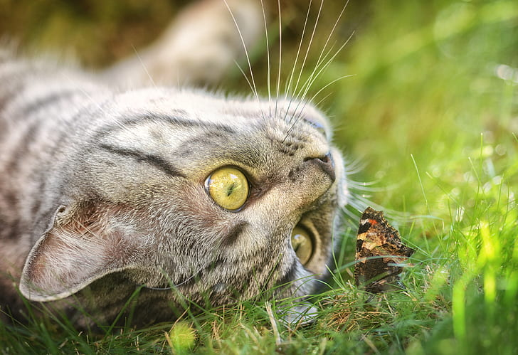 cat playing with butterfly
